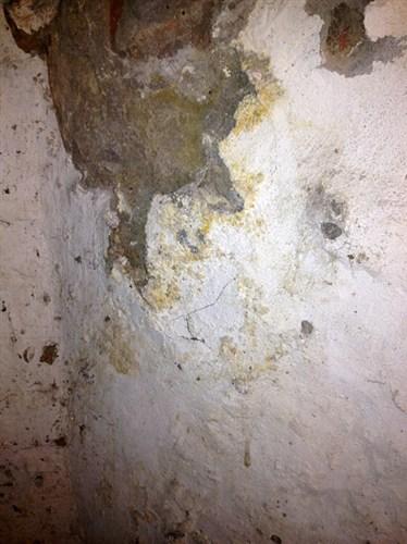 Er dette svamp - og hvilken? - Lav-det-selv.dk